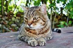 Grande gatto farcito divertente Fotografie Stock
