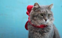 Grande gatto grigio Immagine Stock