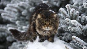 Grande gatto sull'inverno della foresta della neve Immagini Stock