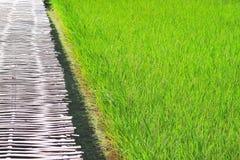 Grande giacimento del riso e passaggio pedonale di bambù fotografie stock libere da diritti