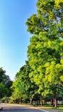 Grande giardino Fotografia Stock Libera da Diritti