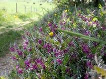 Grande grama verde e vista floral do campo imagem de stock