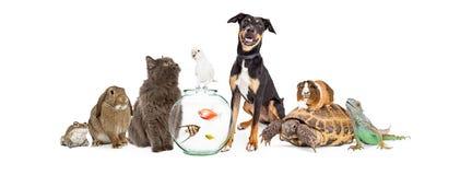 Grande grupo de animais de animal de estimação junto fotografia de stock royalty free