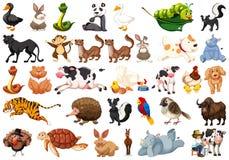 Grande grupo de animais fotografia de stock