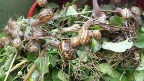 Grande grupo de caracóis que rastejam sobre as folhas vídeos de arquivo