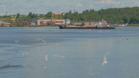 Grande grupo de gaivotas vídeos de arquivo