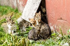 Grande grupo de gatinhos desabrigados em uma rua da cidade perto da casa fotografia de stock