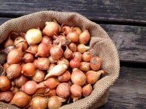 Grande grupo de sementes da cebola Imagem de Stock