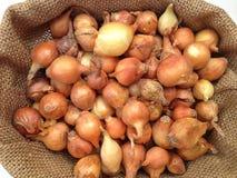 Grande grupo de sementes da cebola Fotografia de Stock Royalty Free