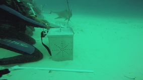 Grande gruppo di attacco del pesce del martello di operatori subacquei subacquei Fauna selvatica dell'oceano profondità archivi video