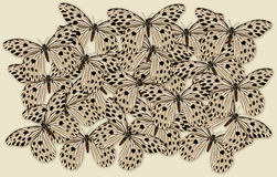 Grande gruppo di farfalla Immagini Stock Libere da Diritti