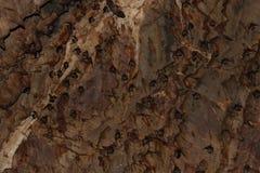 Grande gruppo di pipistrelli nella caverna fotografia stock libera da diritti