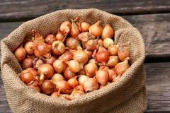 Grande gruppo di semi della cipolla Fotografie Stock Libere da Diritti