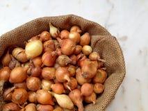 Grande gruppo di semi della cipolla Immagini Stock Libere da Diritti