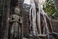 Grande guardião Dentro das ruínas de árvores e de selva de Angkor Wat tomaram sobre construções inteiras Ta Prohm, Siem Reap camb fotografia de stock royalty free