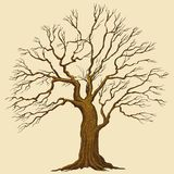 Grande illustration de vecteur d'arbre Images libres de droits