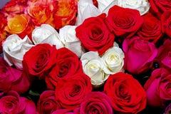 Grande imagem de um ramalhete bonito de rosas vermelhas e brancas Fotos de Stock Royalty Free