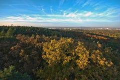 Grande immagine autunnale della foresta con il bello cielo fotografie stock libere da diritti