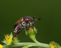 Grande insetto bronzeo in una posa del conferenziere Fotografia Stock