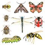 Grande insieme con gli insetti a illustrazione vettoriale