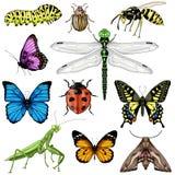 Grande insieme con gli insetti su fondo bianco royalty illustrazione gratis