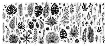 Grande insieme degli elementi neri di scarabocchio foglie tropicali esotiche su un fondo bianco Illustrazione botanica di vettore Immagine Stock Libera da Diritti