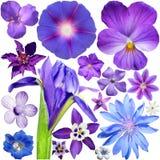 Grande insieme del blu - fiori porpora Fotografia Stock