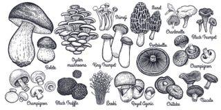 Grande insieme dei funghi commestibili royalty illustrazione gratis