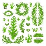 Grande insieme dei ramoscelli e dei rami disegnati a mano di vettore con le foglie Illustrazione di Stock