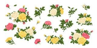 Grande insieme del rosa, delle rose bianche gialle, dei mazzi, dei fiori e dei germogli Immagini Stock