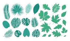 Grande insieme delle foglie di estate Fotografia Stock