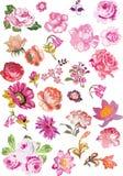 Grande jogo de flores cor-de-rosa Fotografia de Stock Royalty Free