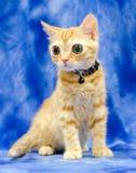 Grande Kitty Cat Seymore Beanie Boo osservata immagine stock libera da diritti