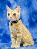 Grande Kitty Cat Seymore Beanie Boo osservata immagini stock