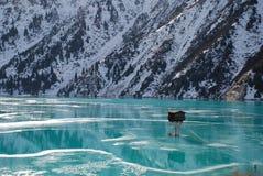 Grande lago Almaty, inverno Immagine Stock