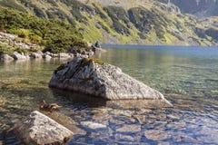 Grande lago uno di cinque laghi in montagne di Tatra - Polonia. Immagine Stock Libera da Diritti