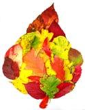 Grande lame d'automne Images stock
