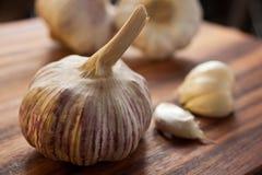 Grande lampadina viola dell'aglio Fotografie Stock Libere da Diritti