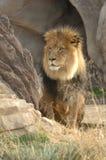 Grande leão na grama 1 imagens de stock royalty free
