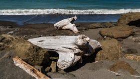 Grande legname galleggiante sulla spiaggia fra le rocce fotografia stock libera da diritti