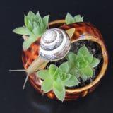 Grande lumaca su un canestro con i fiori Fotografie Stock