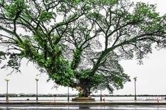 Grande lungomare degli alberi Fotografie Stock
