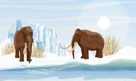 Grande mammut lanoso due Neve e ghiacciaio Erba congelata asciutta dal mare Animali di preistoria Era glaciale illustrazione di stock