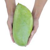 Grande mango verde su fondo bianco Fotografia Stock