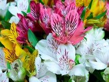 Grande mazzo dei fiori di alstroemeria Immagini Stock