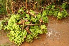 Grande mazzo di banane Immagini Stock Libere da Diritti