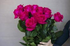 Grande mazzo di belle rose rosa scure in mani su fondo grigio Immagine Stock