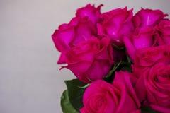 Grande mazzo di belle rose rosa scure su fondo grigio Fotografia Stock