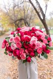 Grande mazzo luminoso di lusso nelle mani di una ragazza sveglia Cento rose del giardino, varietà di David Austin Tre generi immagini stock libere da diritti