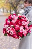 Grande mazzo luminoso di lusso nelle mani di una ragazza sveglia Cento rose del giardino, varietà di David Austin Tre generi fotografia stock libera da diritti